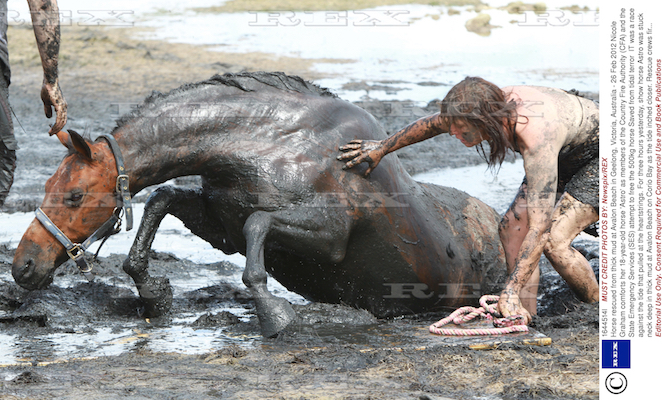 Horse rescued from thick mud at Avalon Beach in Geelong, Victoria, Australia – 26 Feb 2012